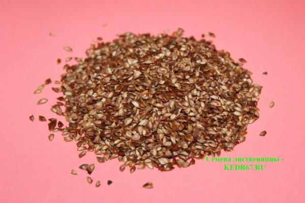 Лиственница сибирская семена