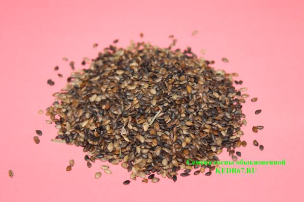 Сосна обыкновенная семена