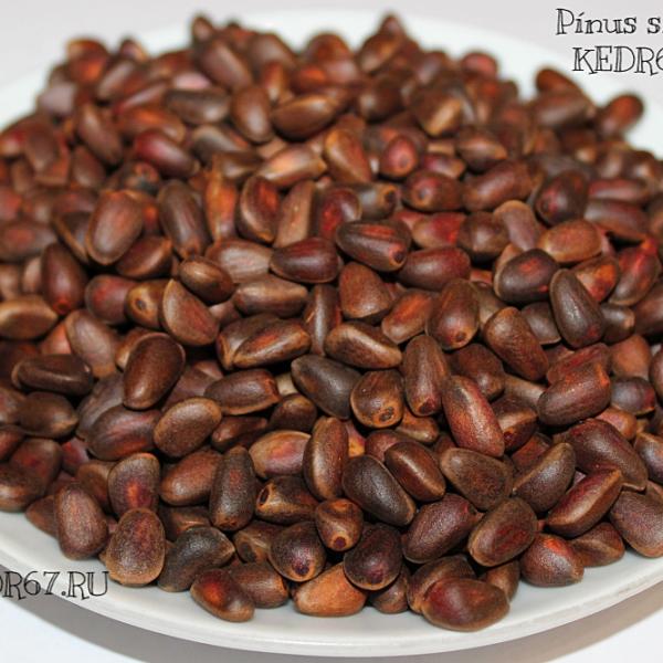 Кедр сибирский семена