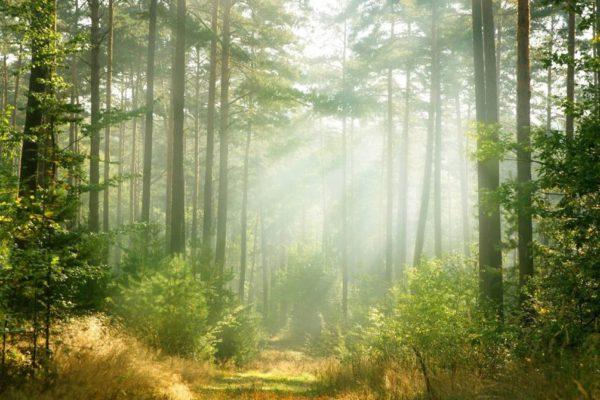 Набор семян хвойных деревьев