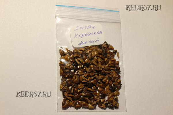 Пихта корейская семена