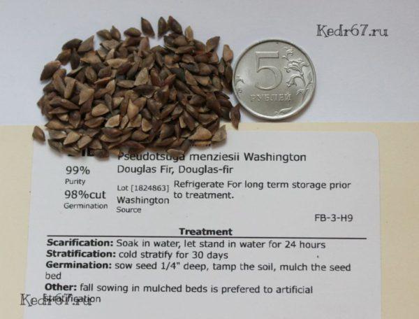 Псевдотсуга Мензиса тисолистная сизая семена