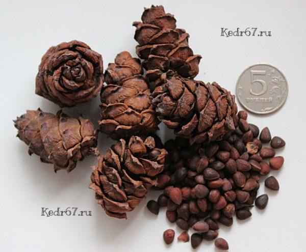 кедровый стланик семена