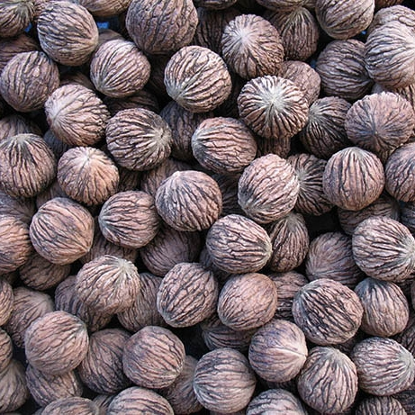 Орех черный семена