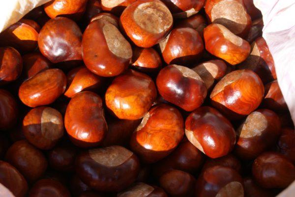 Каштан конский семена