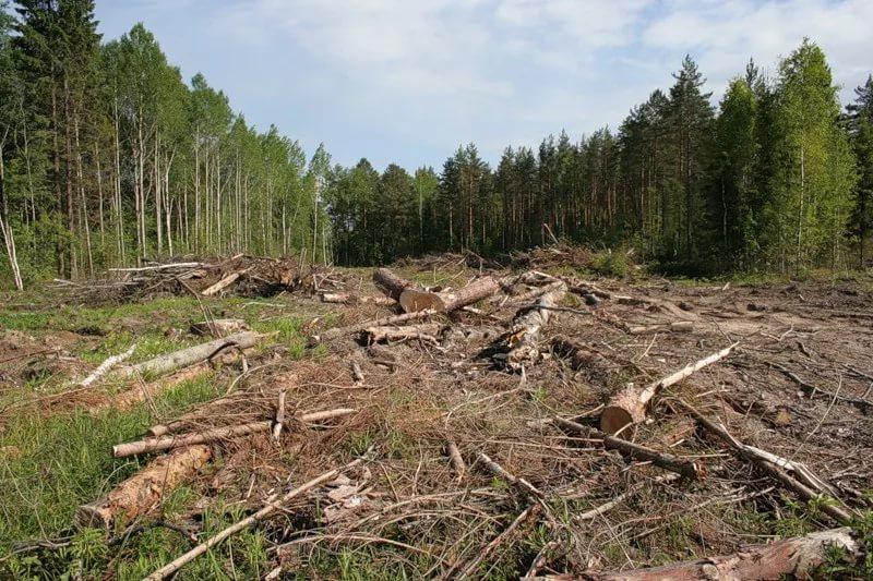 Вымирание леса